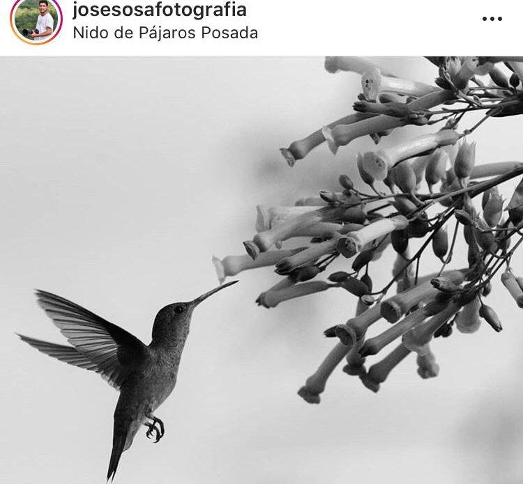 Entrevista con José Sosa por el Día Mundial de las Aves